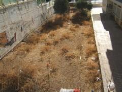 school_garden_aug_2006.JPG
